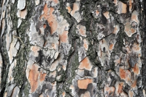 The texture of a tree - as an allegory for the skin in case of psoriasis